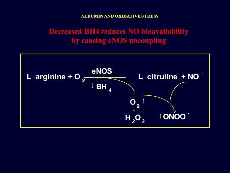 Decreased BH4 reduces NO bioavailability by causing eNOS uncoupling eNOS BH 4 O 2 - H 2 O 2 ONOO - L-arginine+ O 2 L-citruline+ NO. ALBUMIN AND OXIDAT