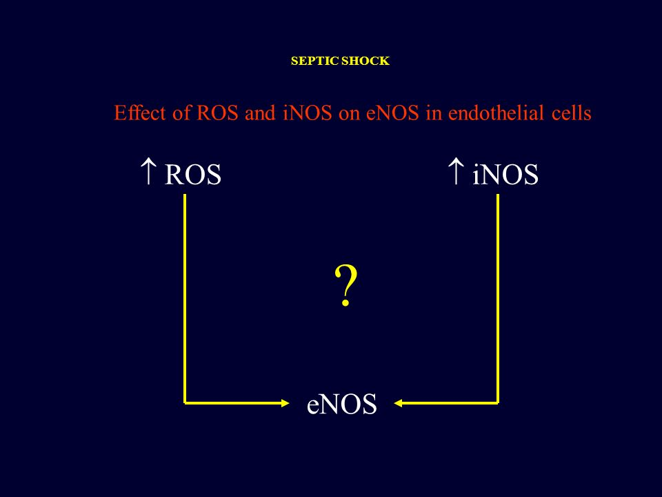 eNOS ROS iNOS Effect of ROS and iNOS on eNOS in endothelial cells ? SEPTIC SHOCK