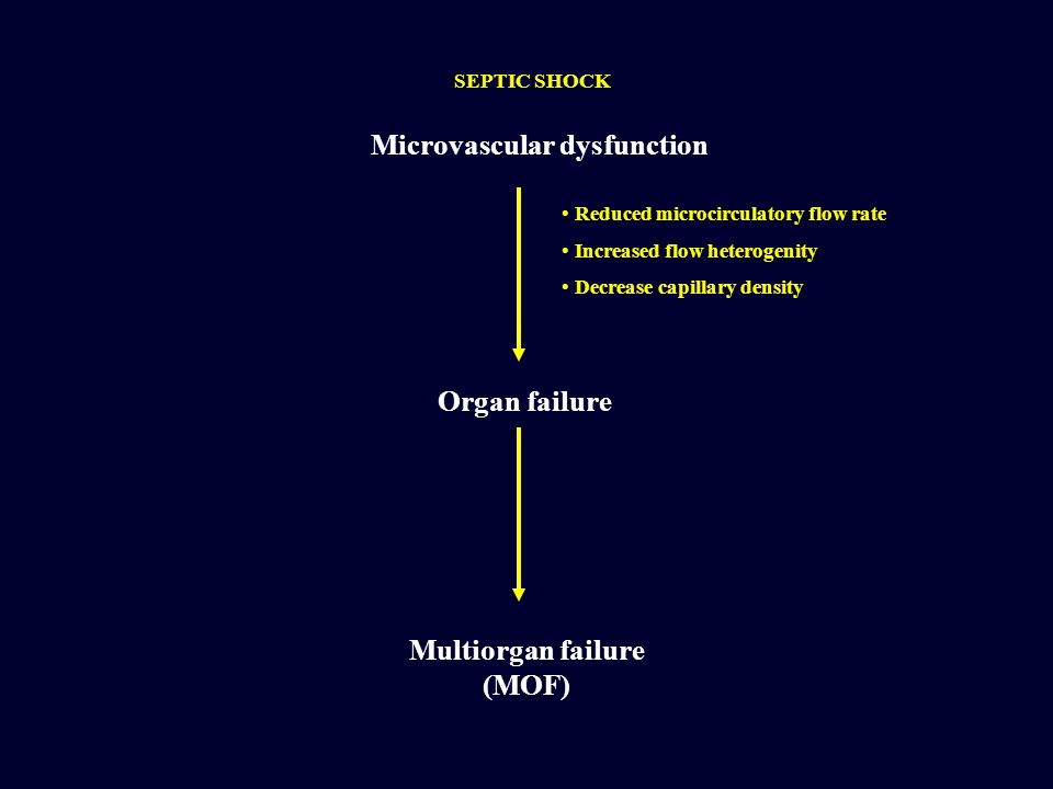 Microvascular dysfunction Organ failure Multiorgan failure (MOF) Reduced microcirculatory flow rate Increased flow heterogenity Decrease capillary den