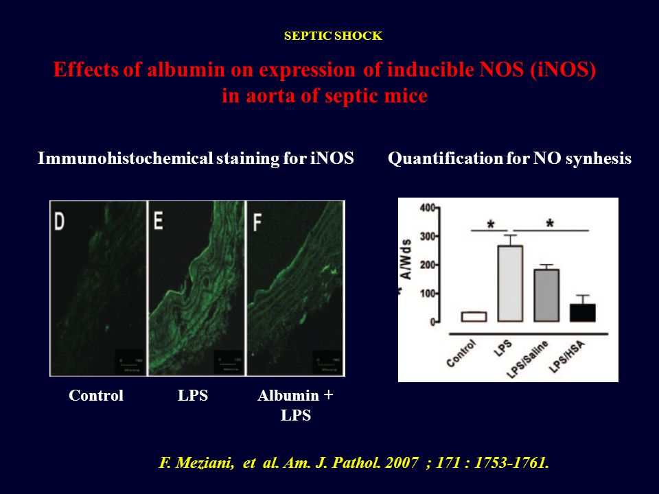 Effects of albumin on expression of inducible NOS (iNOS) in aorta of septic mice Quantification for NO synhesis F. Meziani, et al. Am. J. Pathol. 2007