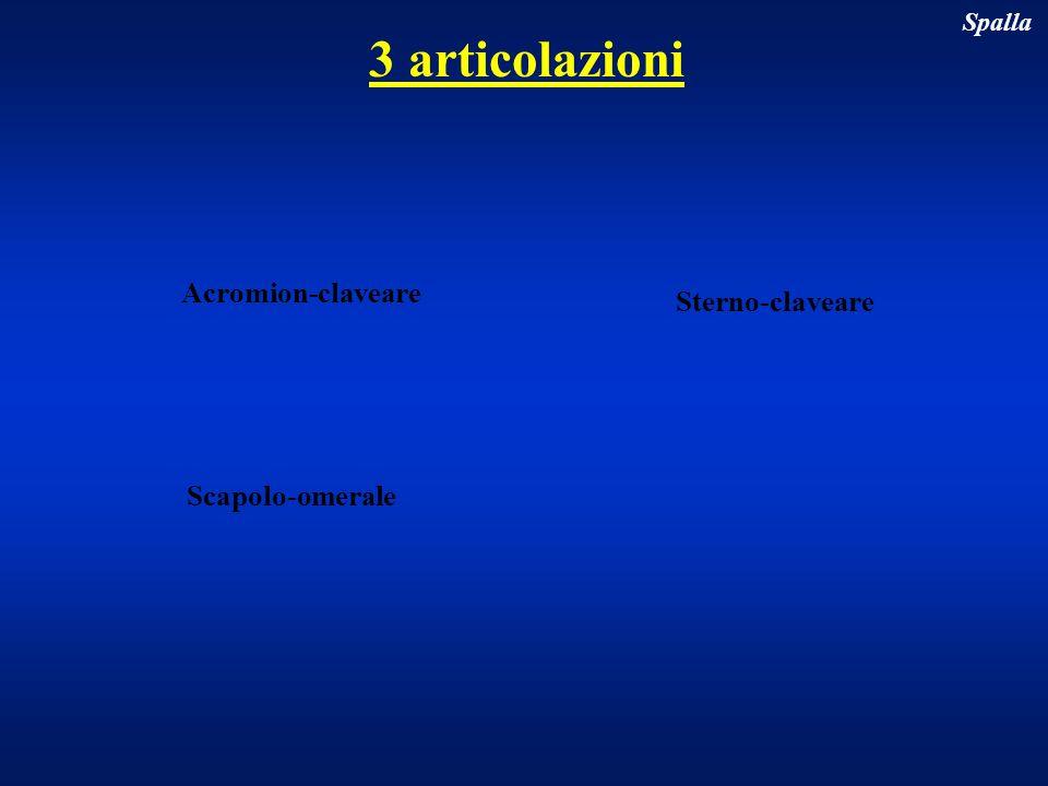 3 articolazioni Spalla Scapolo-omerale Acromion-claveare Sterno-claveare