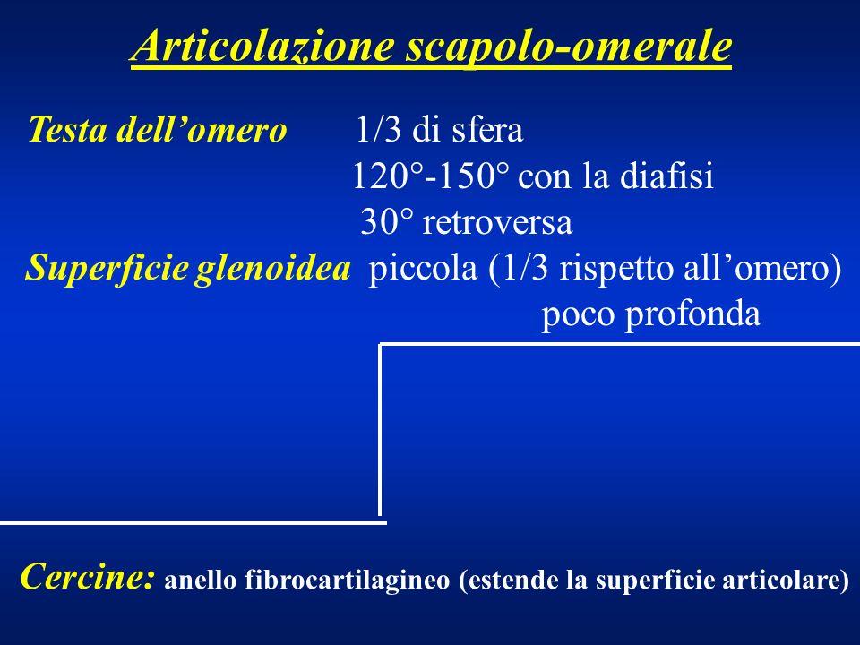Muscoli rotatori della scap-omerale sono 4 provengono dalla faccia ant e post della scapola avvolgono la testa omerale (cuffia dei rotatori) determinano la centratura della testa nella glenoide