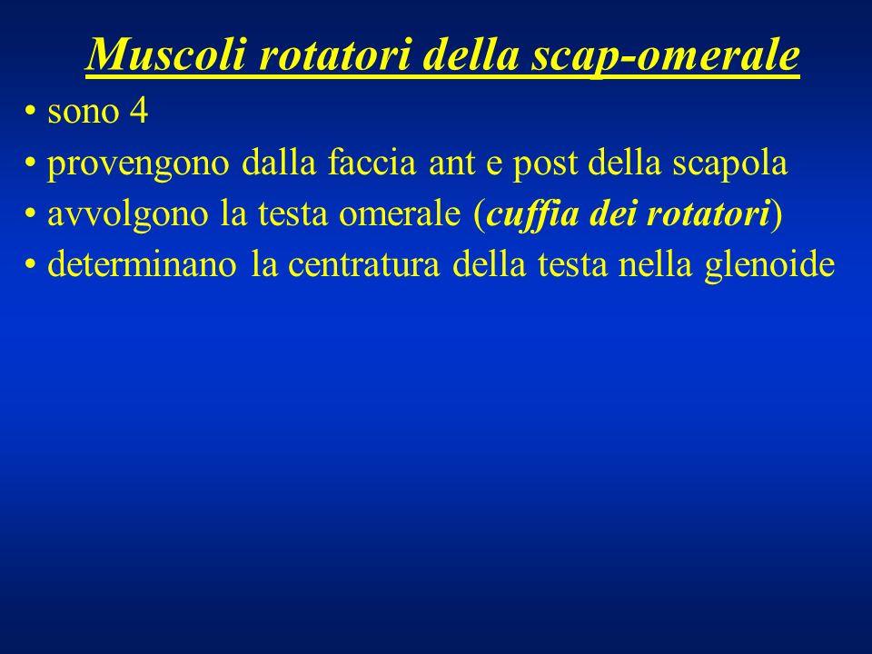 Muscoli rotatori della scap-omerale sono 4 provengono dalla faccia ant e post della scapola avvolgono la testa omerale (cuffia dei rotatori) determina
