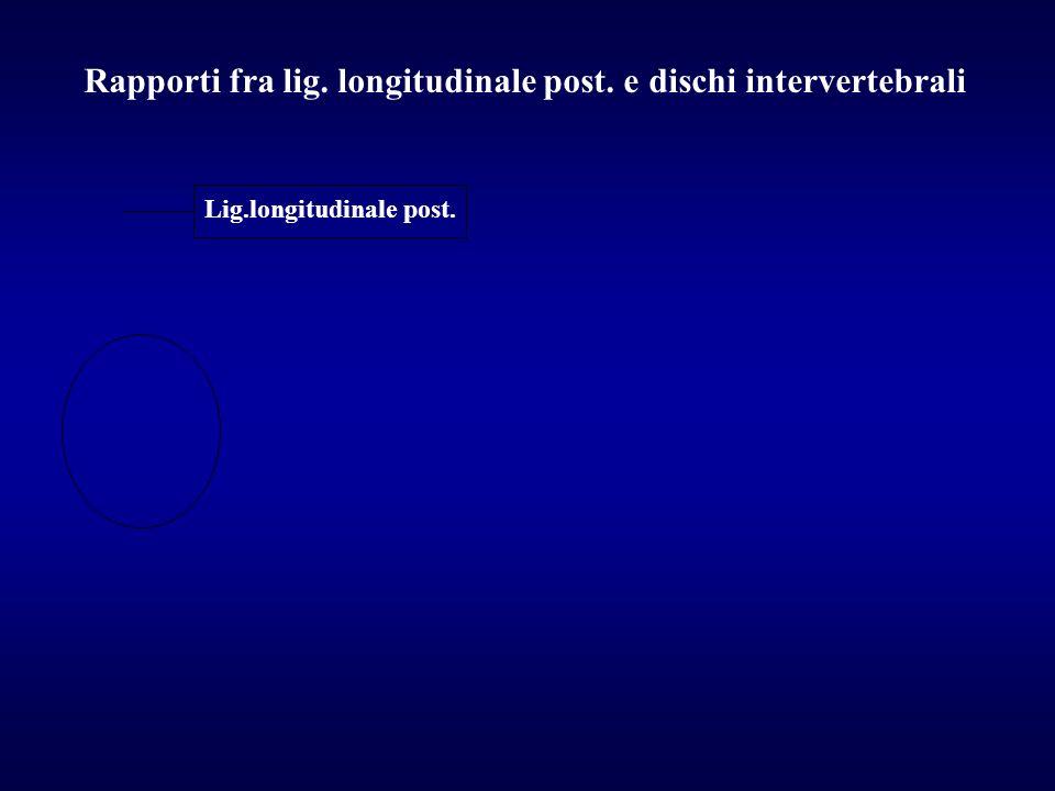 Lig.longitudinale post. Rapporti fra lig. longitudinale post. e dischi intervertebrali
