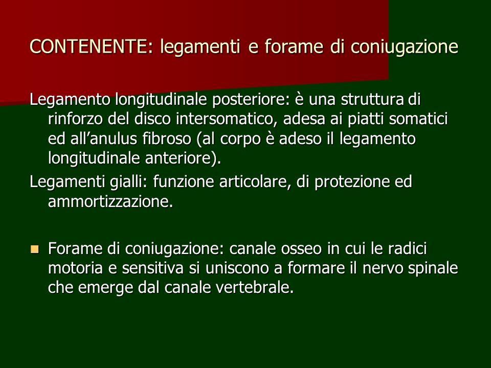 CONTENENTE: legamenti e forame di coniugazione Legamento longitudinale posteriore: è una struttura di rinforzo del disco intersomatico, adesa ai piatt