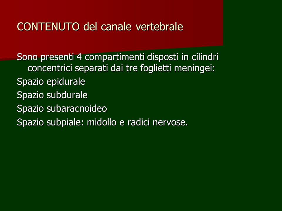 CONTENUTO del canale vertebrale Sono presenti 4 compartimenti disposti in cilindri concentrici separati dai tre foglietti meningei: Spazio epidurale S