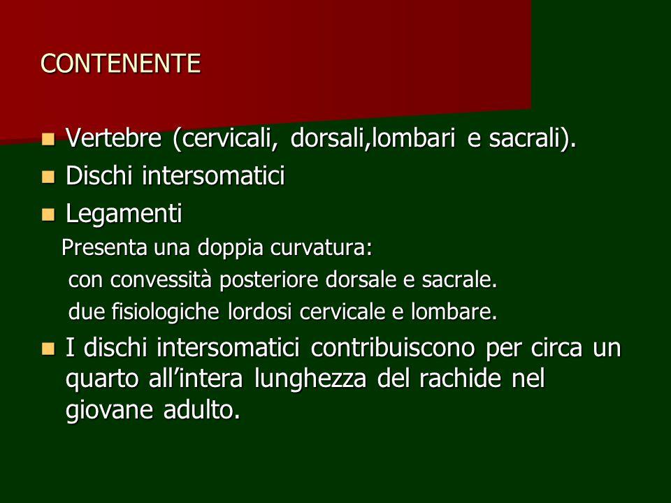 CONTENENTE Vertebre (cervicali, dorsali,lombari e sacrali). Vertebre (cervicali, dorsali,lombari e sacrali). Dischi intersomatici Dischi intersomatici