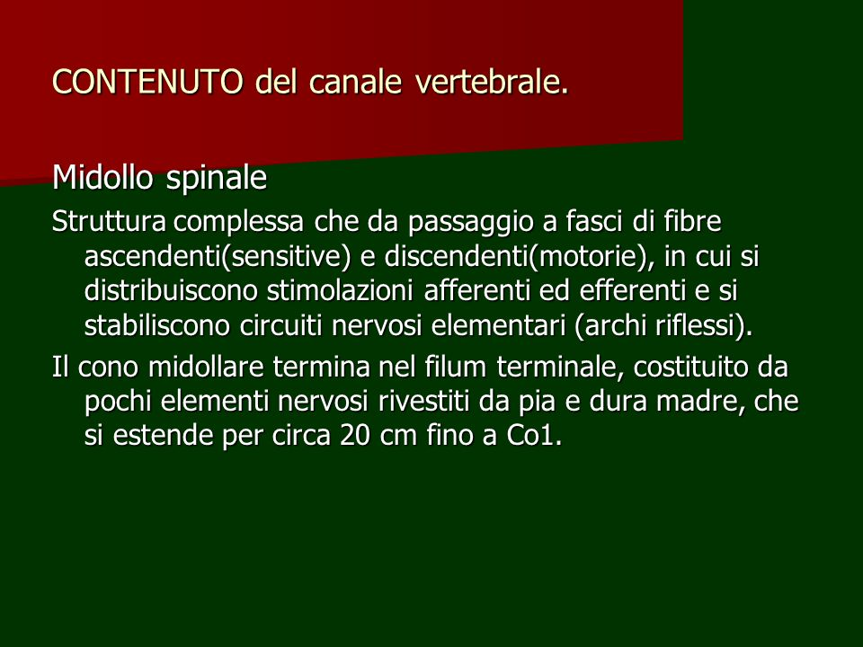 CONTENUTO del canale vertebrale. Midollo spinale Struttura complessa che da passaggio a fasci di fibre ascendenti(sensitive) e discendenti(motorie), i