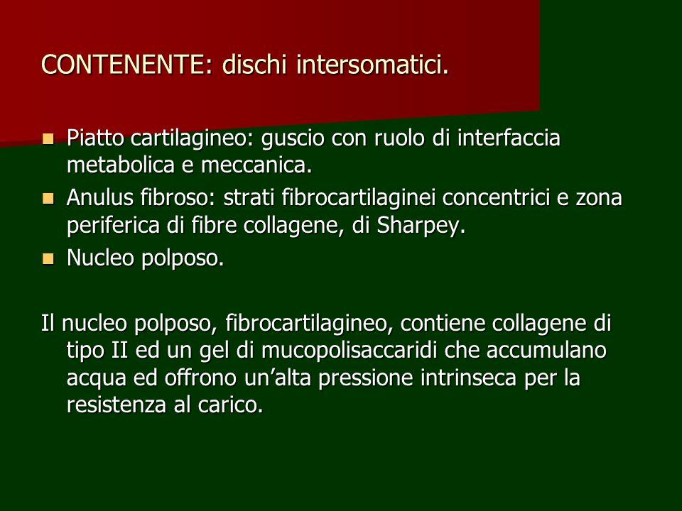 CONTENENTE: dischi intersomatici. Piatto cartilagineo: guscio con ruolo di interfaccia metabolica e meccanica. Piatto cartilagineo: guscio con ruolo d