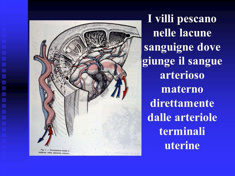 I villi pescano nelle lacune sanguigne dove giunge il sangue arterioso materno direttamente dalle arteriole terminali uterine
