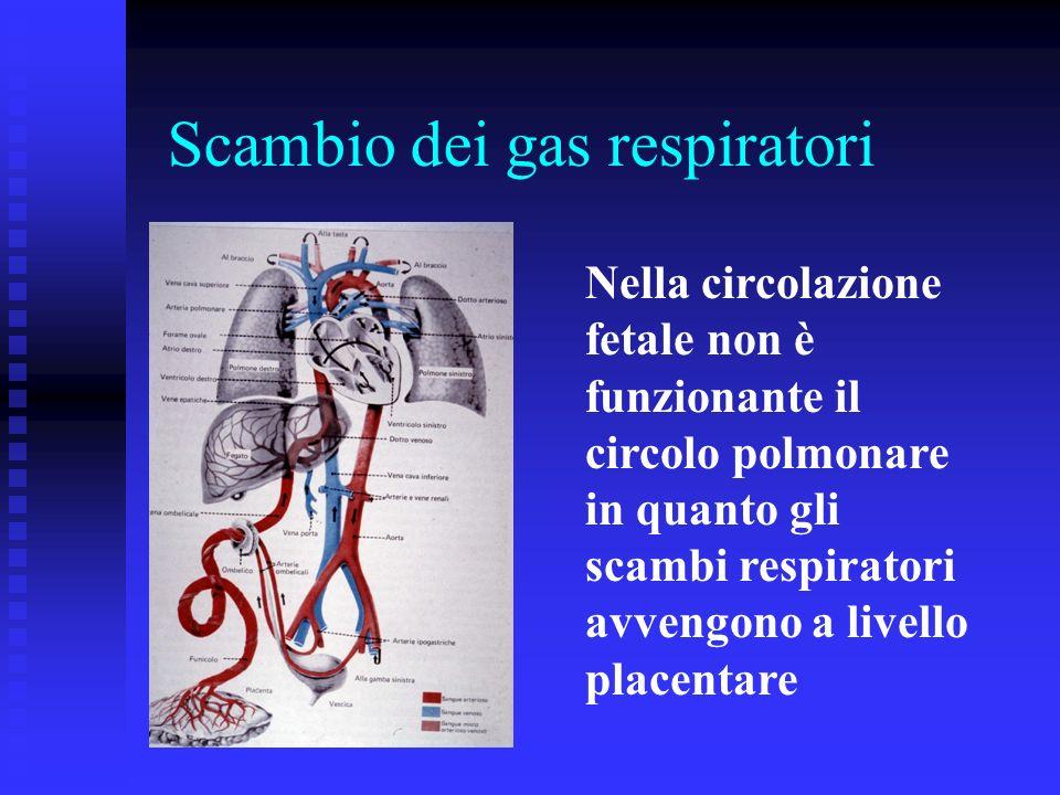 Nella circolazione fetale non è funzionante il circolo polmonare in quanto gli scambi respiratori avvengono a livello placentare Scambio dei gas respi