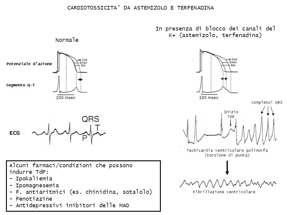 CARDIOTOSSICITA DA ASTEMIZOLO E TERFENADINA Fibrillazione ventricolare Tachicardia ventricolare polimorfa (torsione di punta) Normale In presenza di b