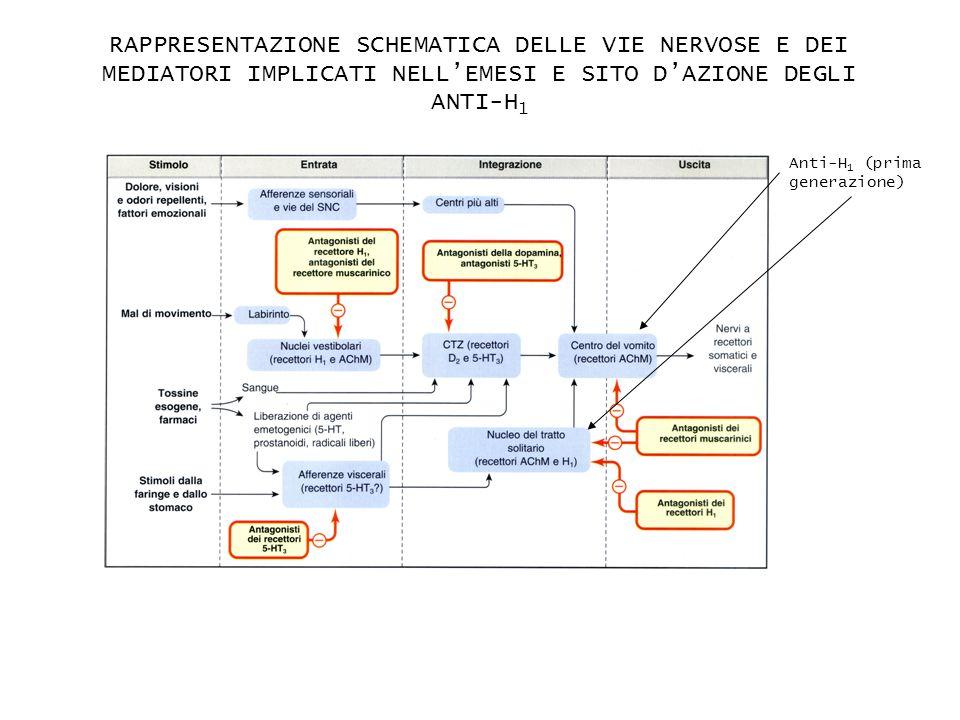 RAPPRESENTAZIONE SCHEMATICA DELLE VIE NERVOSE E DEI MEDIATORI IMPLICATI NELLEMESI E SITO DAZIONE DEGLI ANTI-H 1 Anti-H 1 (prima generazione)