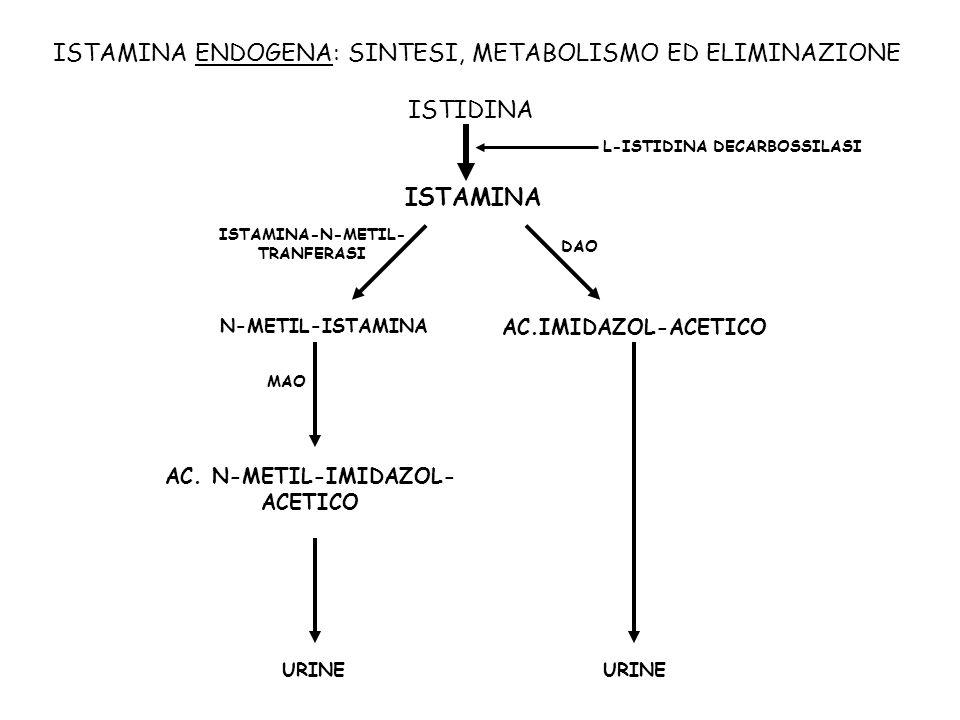 ISTAMINA ENDOGENA: SINTESI, METABOLISMO ED ELIMINAZIONE ISTAMINA-N-METIL- TRANFERASI N-METIL-ISTAMINA MAO AC. N-METIL-IMIDAZOL- ACETICO DAO AC.IMIDAZO