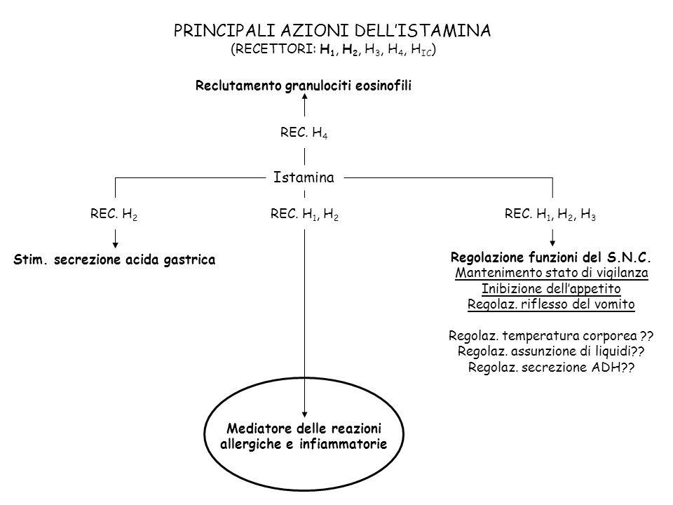PRINCIPALI AZIONI DELLISTAMINA (RECETTORI: H 1, H 2, H 3, H 4, H IC ) Istamina Stim. secrezione acida gastrica Regolazione funzioni del S.N.C. Manteni