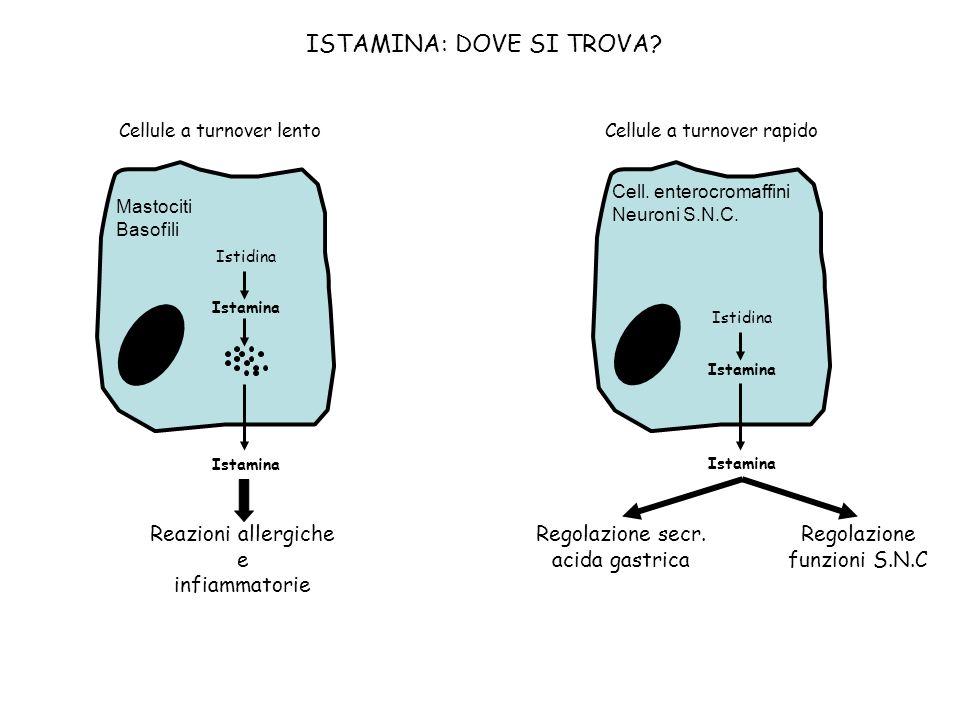 ISTAMINA E REAZIONI ALLERGICHE (meccanismi implicati nel rilascio) PLC IP 3 RS ISTAMINA .