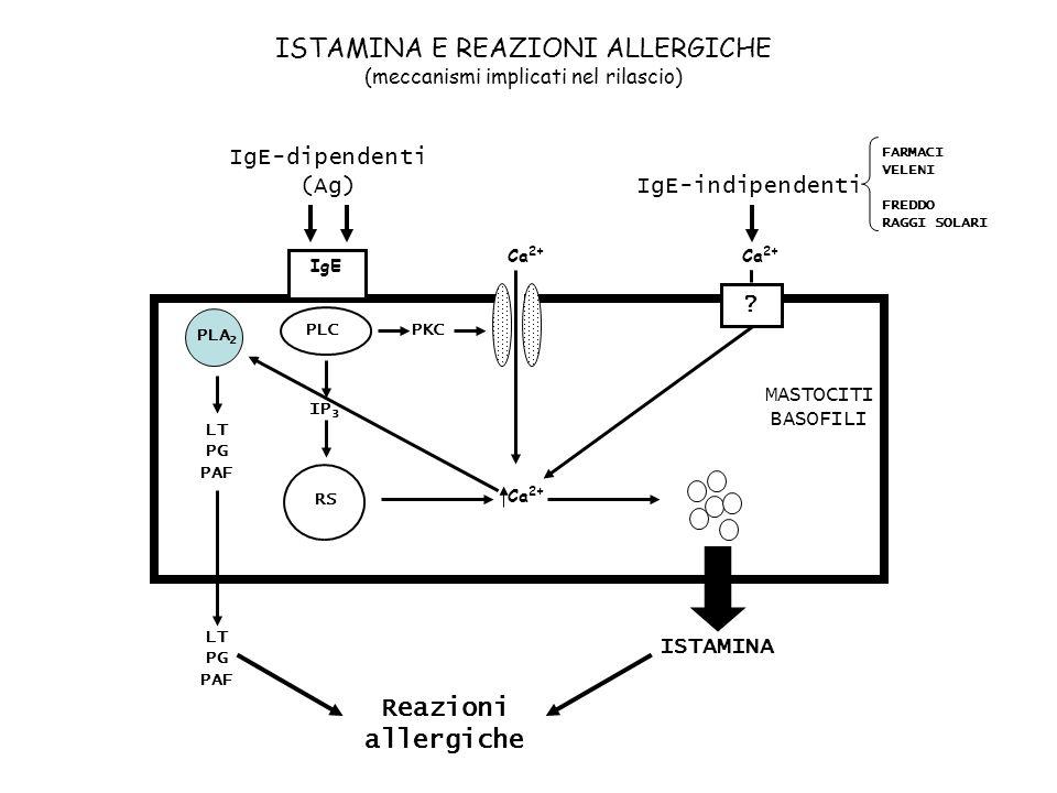 ISTAMINA E REAZIONI ALLERGICHE (meccanismi implicati nel rilascio) PLC IP 3 RS ISTAMINA ? Ca 2+ IgE PLA 2 LT PG PAF MASTOCITI BASOFILI IgE-dipendenti