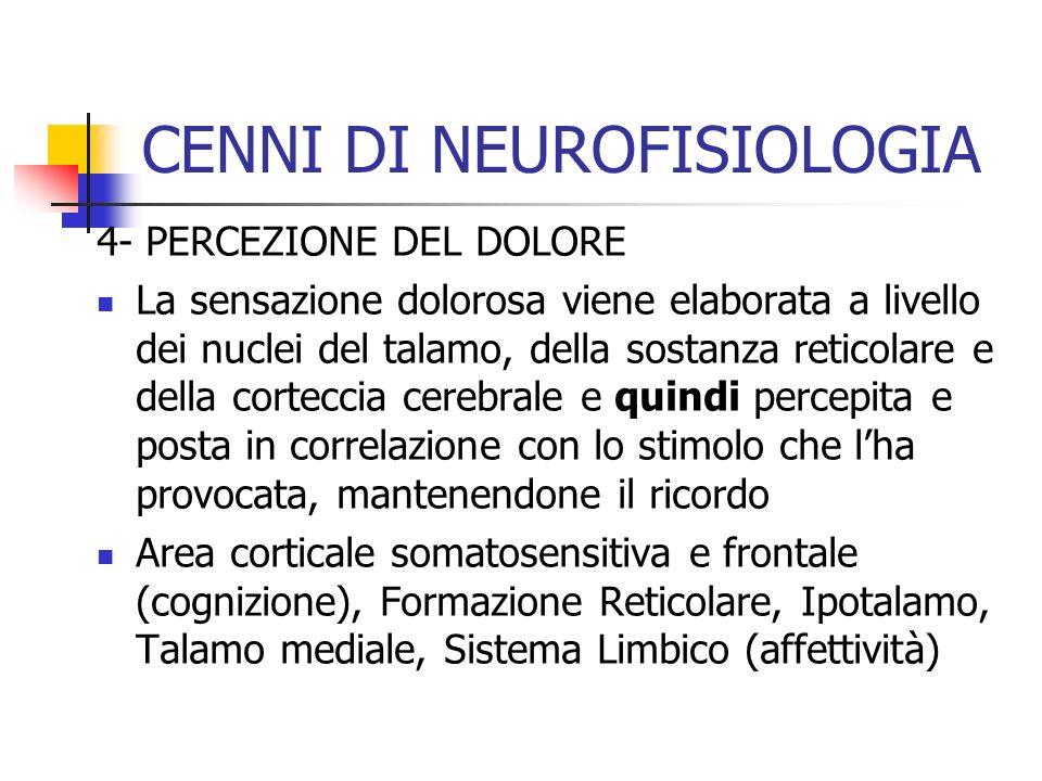 4- PERCEZIONE DEL DOLORE La sensazione dolorosa viene elaborata a livello dei nuclei del talamo, della sostanza reticolare e della corteccia cerebrale
