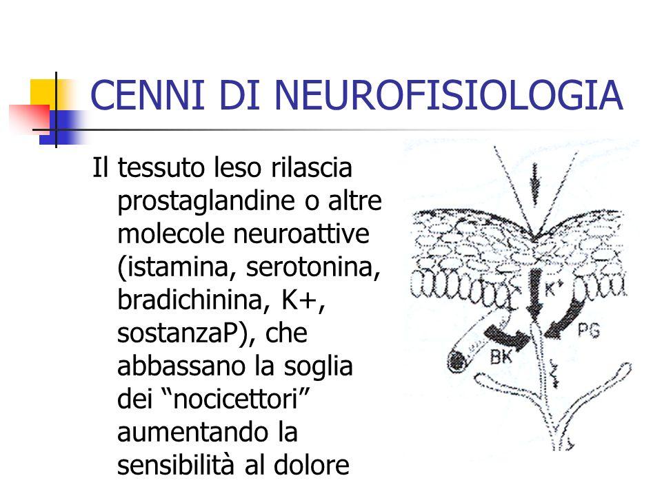 Il tessuto leso rilascia prostaglandine o altre molecole neuroattive (istamina, serotonina, bradichinina, K+, sostanzaP), che abbassano la soglia dei nocicettori aumentando la sensibilità al dolore CENNI DI NEUROFISIOLOGIA