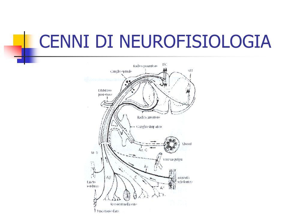 3- MODULAZIONE Teoria del GATE-CONTROL (inibizione pre- sinaptica) Alcuni neuroni della Sostanza Grigia Periacqueduttale (mesencefalo) inviano al midollo spinale fibre discendenti inibitorie, serotoninergiche e colinergiche, che possono essere attivate con endorfine, oppioidi, amitriptilina CENNI DI NEUROFISIOLOGIA