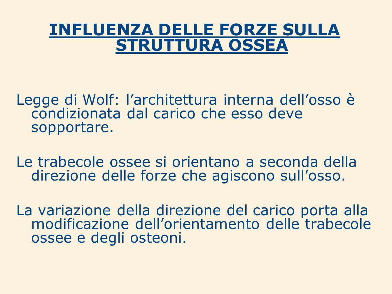 INFLUENZA DELLE FORZE SULLA STRUTTURA OSSEA Legge di Wolf: larchitettura interna dellosso è condizionata dal carico che esso deve sopportare. Le trabe
