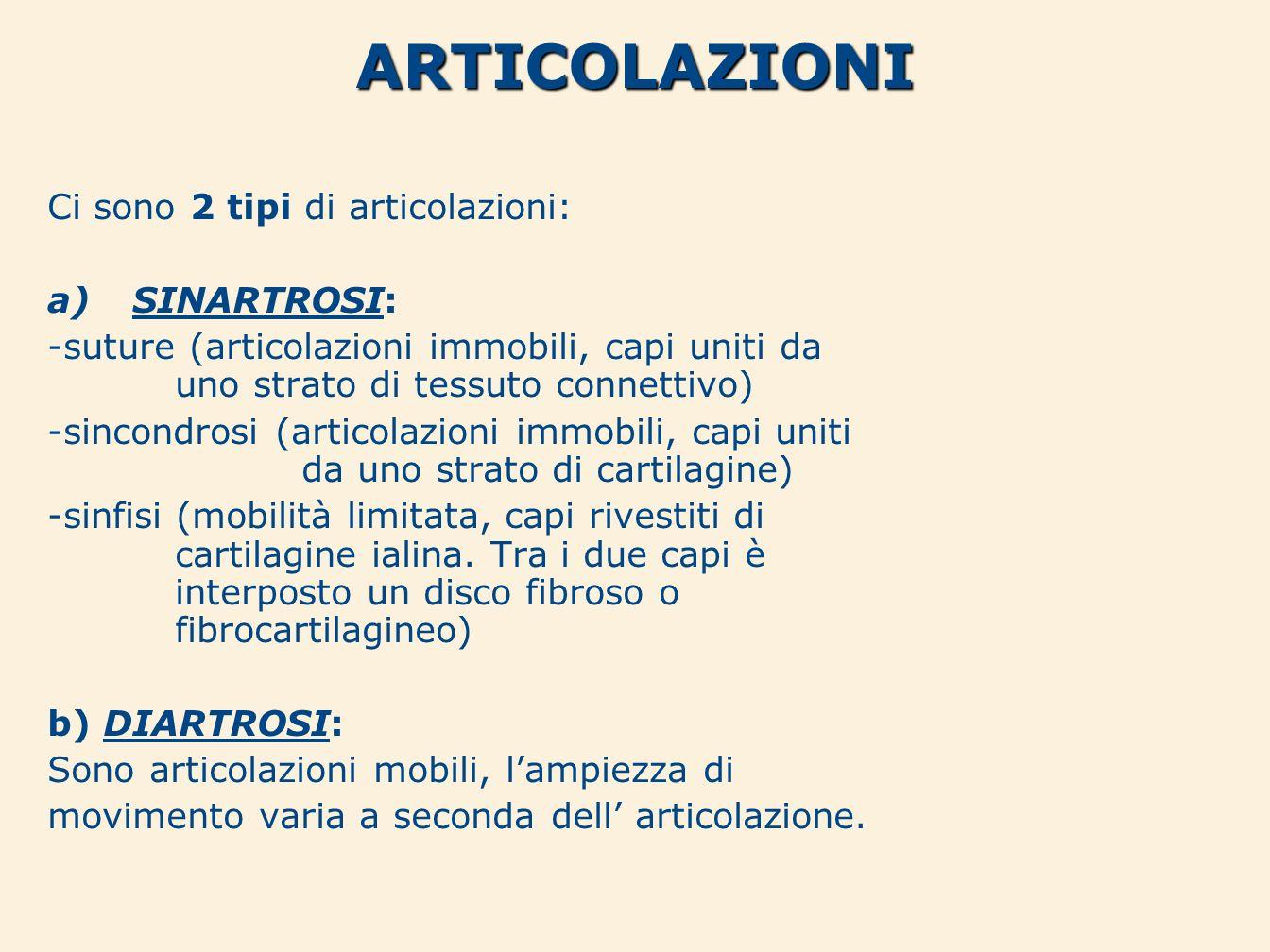 ARTICOLAZIONI Ci sono 2 tipi di articolazioni: a)SINARTROSI: -suture (articolazioni immobili, capi uniti da uno strato di tessuto connettivo) -sincond