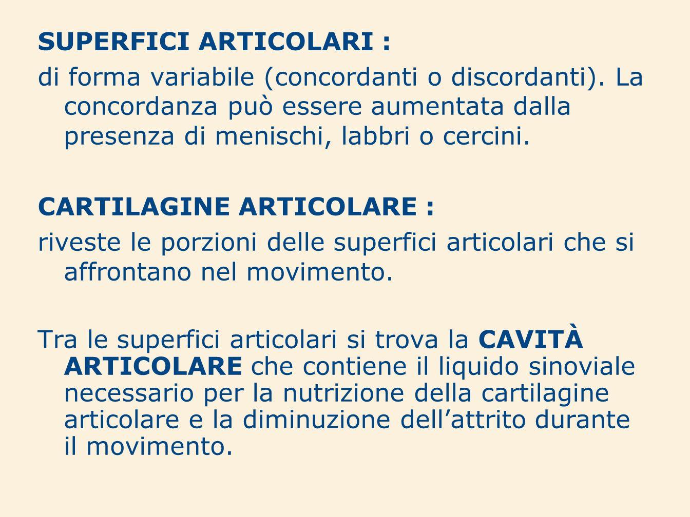 SUPERFICI ARTICOLARI : di forma variabile (concordanti o discordanti). La concordanza può essere aumentata dalla presenza di menischi, labbri o cercin