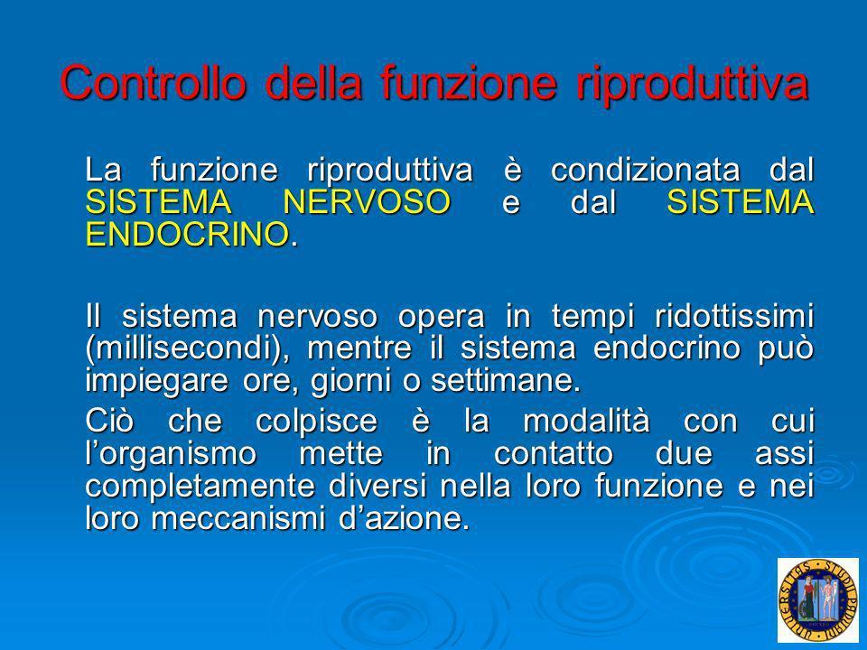 Controllo della funzione riproduttiva La funzione riproduttiva è condizionata dal SISTEMA NERVOSO e dal SISTEMA ENDOCRINO. Il sistema nervoso opera in