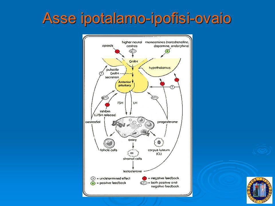 Le gonadotropine ipofisarie sono 2: FSH ed LH Sono glicoproteine dotate di due subunità: la subunità α è aspecifica e comune anche allhCG e al TSH la subunità α è aspecifica e comune anche allhCG e al TSH la subunità β è ormono-specifica la subunità β è ormono-specifica Questi ormoni sono secreti con pattern pulsatile: le pulsazioni dellLH mutano a seconda della fase del ciclo: in fase follicolare la frequenza è di un pulse ogni 60-80 min., mentre in fase luteinica la frequenza si riduce progressivamente.