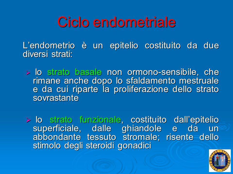 Ciclo endometriale Lendometrio è un epitelio costituito da due diversi strati: lo strato basale non ormono-sensibile, che rimane anche dopo lo sfaldam