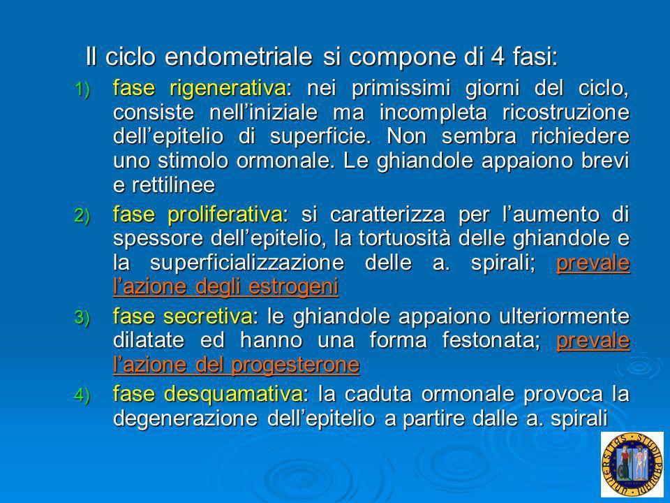 Il ciclo endometriale si compone di 4 fasi: 1) fase rigenerativa: nei primissimi giorni del ciclo, consiste nelliniziale ma incompleta ricostruzione d
