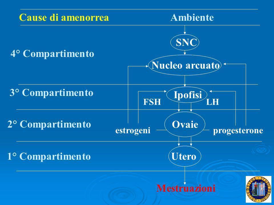 Ambiente SNC Nucleo arcuato 4° Compartimento Utero Mestruazioni 1° Compartimento Ovaie 2° Compartimento estrogeniprogesterone Ipofisi 3° Compartimento