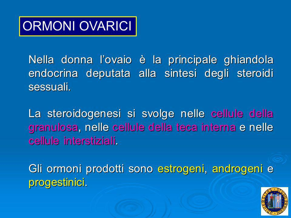 Nella donna lovaio è la principale ghiandola endocrina deputata alla sintesi degli steroidi sessuali. La steroidogenesi si svolge nelle cellule della