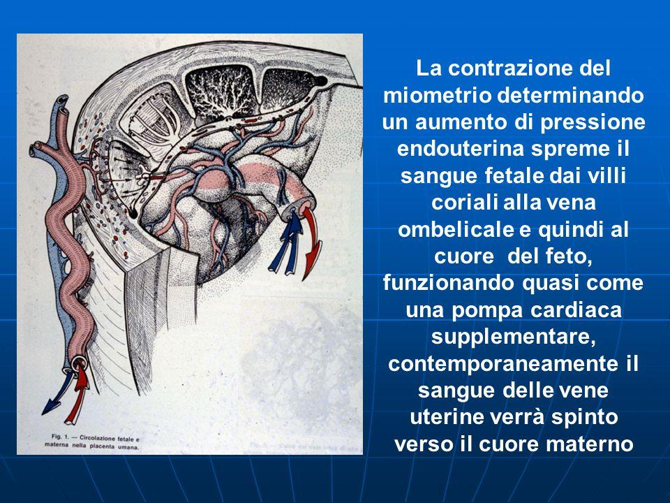La contrazione del miometrio determinando un aumento di pressione endouterina spreme il sangue fetale dai villi coriali alla vena ombelicale e quindi