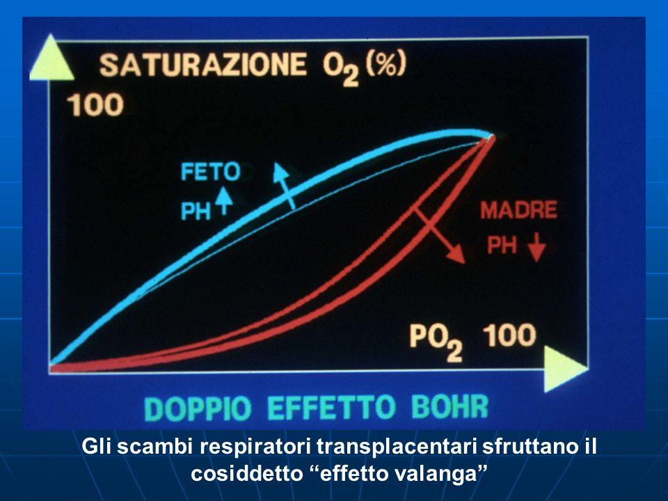 Fattori che tendono a migliorare lossigenazione fetale durante la contrazione uterina: il rallentamento della circolazione nelle lacune sanguigne consentirà un progressivo aumento della superficie di scambio il rallentamento della circolazione nelle lacune sanguigne consentirà un progressivo aumento della superficie di scambio il maggior tempo utilizzabile dagli scambi renderanno più facile il progressivo passaggio dellO2 da madre a feto grazie al doppio effetto Bohr il maggior tempo utilizzabile dagli scambi renderanno più facile il progressivo passaggio dellO2 da madre a feto grazie al doppio effetto Bohr ad ogni contrazione uterina il feto usufruisce di una specie di autotrasfusione di sangue ossigenato, poiché il sangue contenuto nei villi viene spremuto verso la vena ombelicale e quindi verso il cuore fetale ad ogni contrazione uterina il feto usufruisce di una specie di autotrasfusione di sangue ossigenato, poiché il sangue contenuto nei villi viene spremuto verso la vena ombelicale e quindi verso il cuore fetale la contrazione del miometrio facilita il ritorno venoso nel circolo materno, aumentando la pressione venosa nelle vene uterine, e quindi indirettamente migliora le possibilità di veicolare ossigeno al feto.