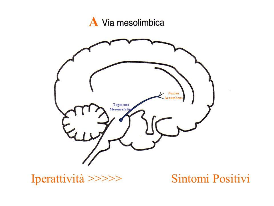 A Nucleo Accumbens Tegmento Mesencefalico Iperattività >>>>> Sintomi Positivi
