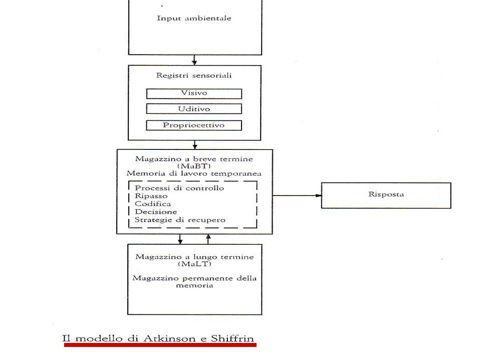 Componenti della Memoria Memoria Sensoriale Memoria a Breve Termine - MBT Working Memory Memoria a Lungo Termine - MLT