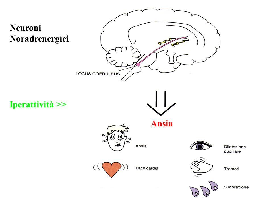 Neuroni Noradrenergici Iperattività >> Ansia
