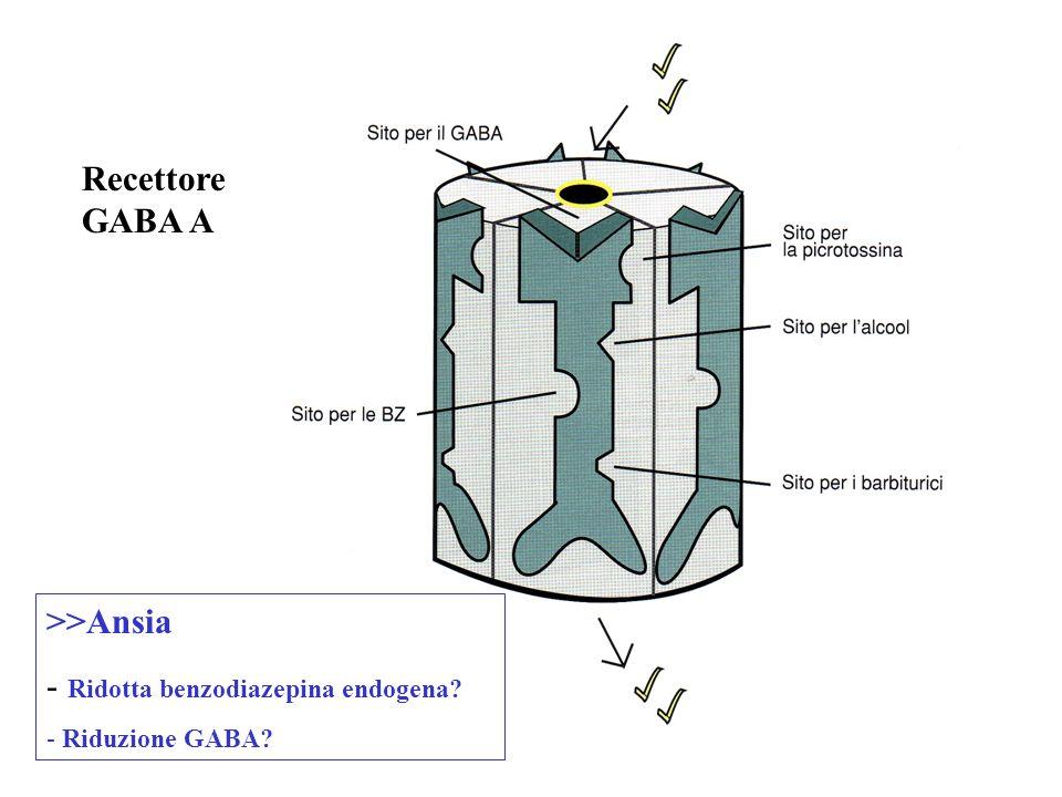 Recettore GABA A >>Ansia - Ridotta benzodiazepina endogena? - Riduzione GABA?