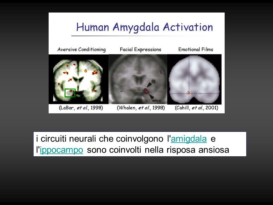 i circuiti neurali che coinvolgono l'amigdala e l'ippocampo sono coinvolti nella risposa ansiosaamigdalaippocampo