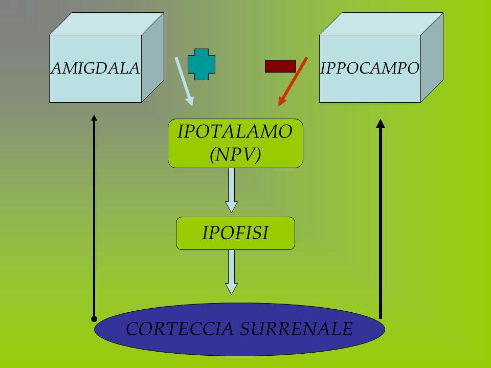 CORTECCIA SURRENALE IPPOCAMPOAMIGDALA IPOTALAMO (NPV) IPOFISI