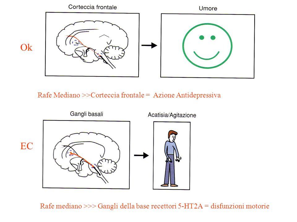 Rafe Mediano >>Corteccia frontale = Azione Antidepressiva Rafe mediano >>> Gangli della base recettori 5-HT2A = disfunzioni motorie Ok EC