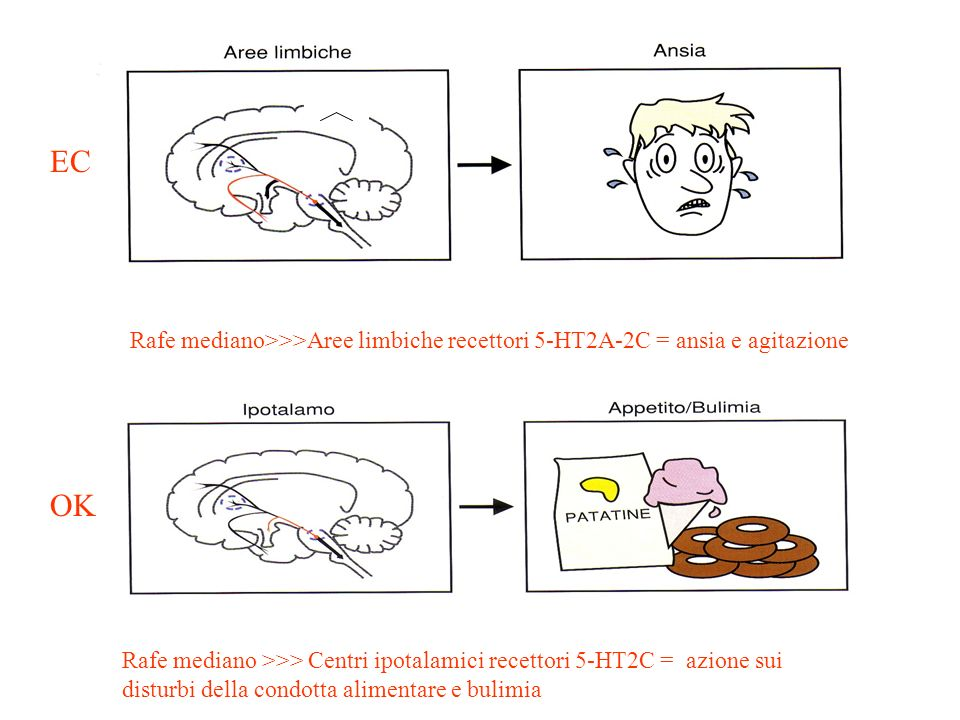 Rafe mediano >>> Centri ipotalamici recettori 5-HT2C = azione sui disturbi della condotta alimentare e bulimia Rafe mediano>>>Aree limbiche recettori