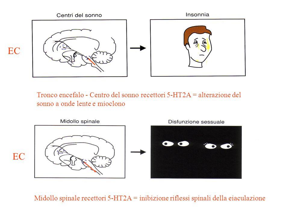 Tronco encefalo - Centro del sonno recettori 5-HT2A = alterazione del sonno a onde lente e mioclono Midollo spinale recettori 5-HT2A = inibizione rifl