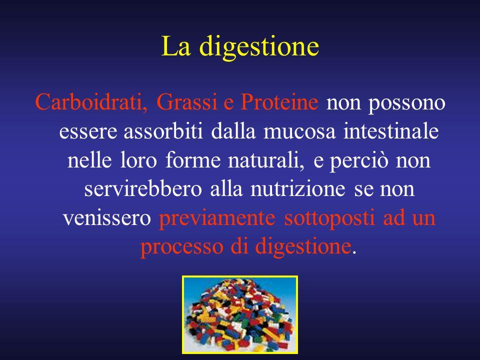 La digestione Carboidrati, Grassi e Proteine non possono essere assorbiti dalla mucosa intestinale nelle loro forme naturali, e perciò non servirebber
