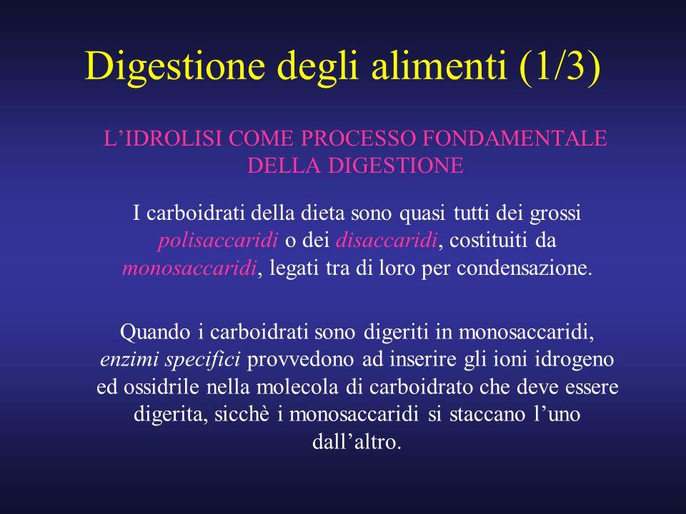 Digestione degli alimenti (1/3) LIDROLISI COME PROCESSO FONDAMENTALE DELLA DIGESTIONE I carboidrati della dieta sono quasi tutti dei grossi polisaccar