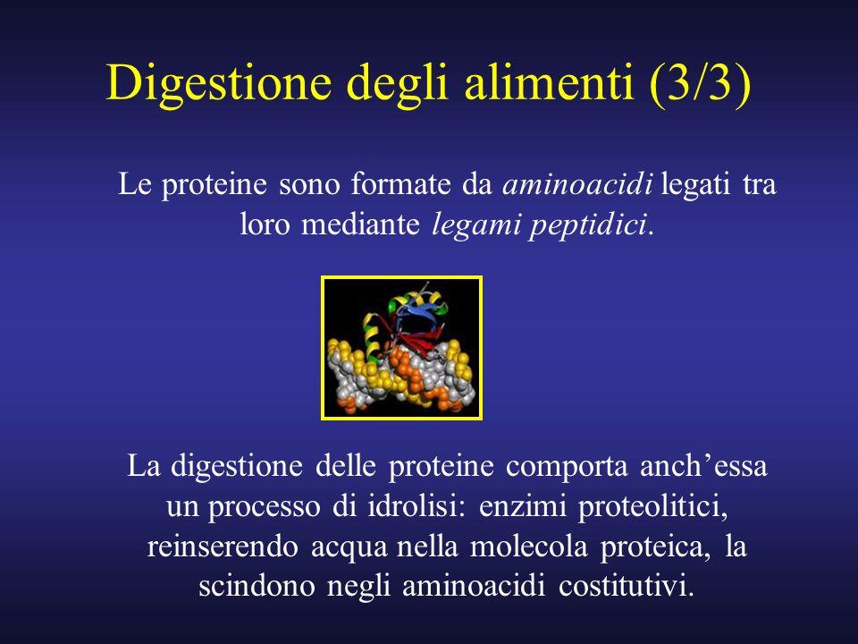 Digestione degli alimenti (3/3) Le proteine sono formate da aminoacidi legati tra loro mediante legami peptidici. La digestione delle proteine comport