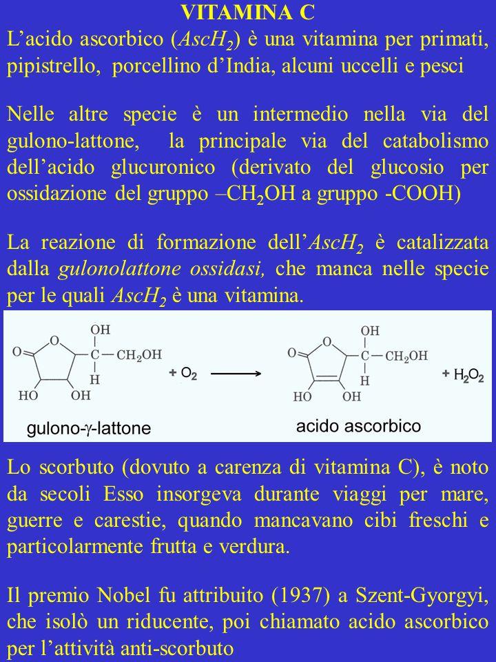 VITAMINA C Lacido ascorbico (AscH 2 ) è una vitamina per primati, pipistrello, porcellino dIndia, alcuni uccelli e pesci Nelle altre specie è un inter