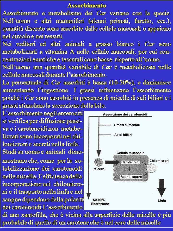 Assorbimento Assorbimento e metabolismo dei Car variano con la specie. Nelluomo e altri mammiferi (alcuni primati, furetto, ecc.), quantità discrete s