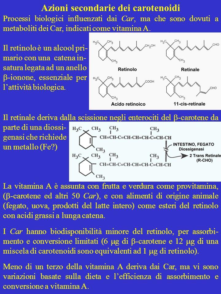 Azioni secondarie dei carotenoidi Processi biologici influenzati dai Car, ma che sono dovuti a metaboliti dei Car, indicati come vitamina A. Il retino